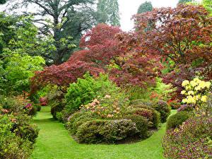 Bilder England Garten Strauch Rasen Ramster Gardens Surrey