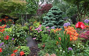 Fotos England Garten Rhododendren Mohn Design Strauch Walsall Garden Natur