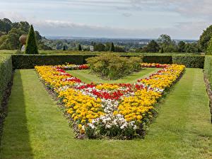 Hintergrundbilder England Garten Tagetes Rasen Strauch Cliveden Garden