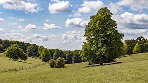 Desktop hintergrundbilder England Grünland Himmel Bäume Wolke Tylers Green Natur