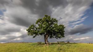 Hintergrundbilder England Bäume Wolke Gras Hertfordshire