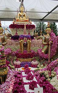 Hintergrundbilder England Orchideen Park London Design Chelsea flower show