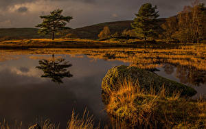 Fotos England Stein Sumpf Bäume Natur
