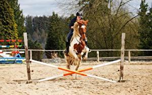 Hintergrundbilder Pferdesport Hauspferd Sand Sprung sportliches Mädchens