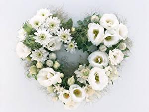 Bilder Lisianthus Chrysanthemen Grauer Hintergrund Design Herz Weiß Blumen