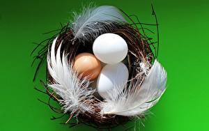 Bilder Federn Farbigen hintergrund Nest Eier