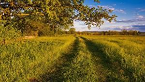 Hintergrundbilder Acker Wege Sommer Ast Gras Natur