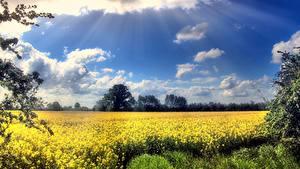 Fotos Acker Himmel Raps Wolke Lichtstrahl Natur