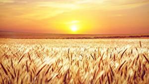 Bilder Acker Morgendämmerung und Sonnenuntergang Horizont Ähren Sonne Natur