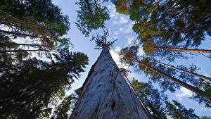 Bilder Finnland Wald Bäume Untersicht Ansicht von unten Baumstamm