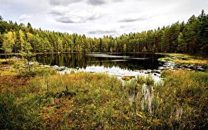 Fotos Finnland Helsinki Park Wälder Herbst See Gras Sipoonkorpi National Park