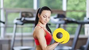 Hintergrundbilder Fitness Hanteln Hand Trainieren Brünette sportliches Mädchens