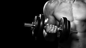 Bilder Fitness Mann Hanteln Hand dumbbell sportliches