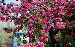 Hintergrundbilder Blühende Bäume Frühling Ast Blumen