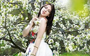 Hintergrundbilder Blühende Bäume Frühling Brünette Kleid Starren Mädchens