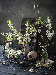 Bilder Blühende Bäume Stillleben Ast Vase Blumen