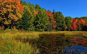 Hintergrundbilder Wälder Herbst Sumpf