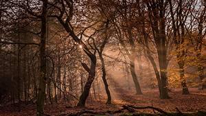 Hintergrundbilder Wald Herbst Bäume Lichtstrahl