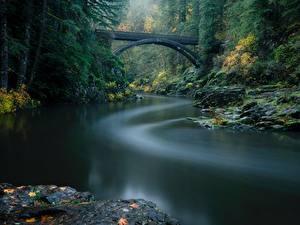Bilder Wälder Fluss Brücke Parks USA Washington Lewis River, Yacolt, Moulton Falls Regional Park Natur