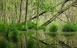 Bilder Wald Sumpf Bäume
