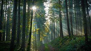 Hintergrundbilder Wald Bäume Nebel Lichtstrahl Natur