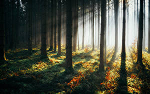 Fotos Wald Bäume Lichtstrahl Natur