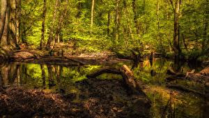 Hintergrundbilder Wald Baumstamm Sumpf Natur
