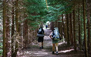 Photo Forests USA Parks Trees Path Walking Tourism Traveler Rucksack West Virginia, Dolly-Sods Nature