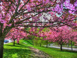 Hintergrundbilder Frankreich Frühling Blühende Bäume Ast Lorraine