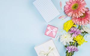Hintergrundbilder Gerbera Chrysanthemen Farbigen hintergrund Geschenke Schleife Vorlage Grußkarte Blumen
