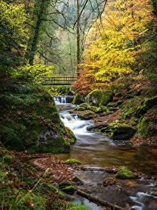 Desktop hintergrundbilder Deutschland Herbst Wald Brücke Steine Bäche Bäume Laubmoose Black Forest, Baden-Baden Natur