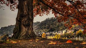 Hintergrundbilder Deutschland Herbst Gebäude Baumstamm Ast Sankt Goar Städte