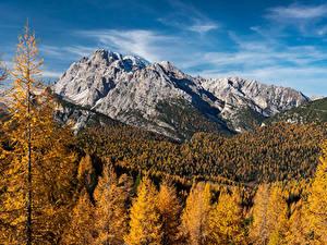 Desktop hintergrundbilder Deutschland Herbst Berg Wälder Alpen Laubmoose Natur