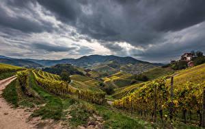 Fotos Deutschland Acker Herbst Landschaftsfotografie Rebberg Hügel Strauch Natur