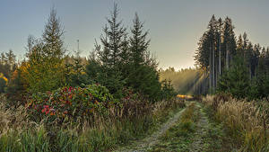 Fotos Deutschland Wald Bayern Weg Fichten Lichtstrahl Gras