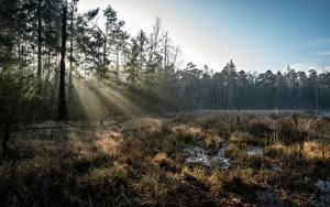 Hintergrundbilder Deutschland Wald Sumpf Lichtstrahl Bäume Grossdittmannsdorf, Saxony