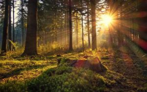 Hintergrundbilder Deutschland Wald Morgen Bäume Laubmoose Lichtstrahl Sonne