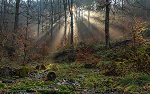 Fotos Deutschland Wald Bäume Laubmoose Lichtstrahl South-Eifel