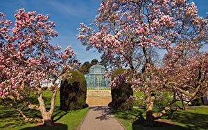 Pictures Germany Gardens Spring Flowering trees Zoological Botanical Gardens Stuttgart Nature