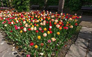 Bilder Deutschland Garten Tulpen Viel Mehrfarbige Botanischen Garten Solingen Blumen