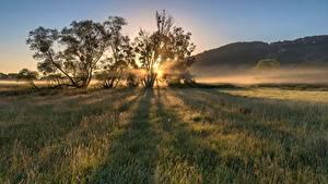 Bilder Deutschland Morgen Morgendämmerung und Sonnenuntergang Acker Bäume Moselle Valley