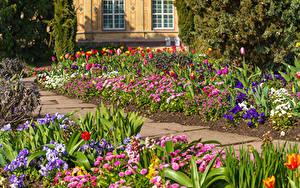 Bilder Deutschland Park Gänseblümchen Tulpen Muttergottesschuh Karlsruhe