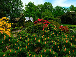 Images Germany Parks Bush Botanischer Garten Solingen Nature