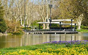 Bilder Deutschland Park Teich Frühling Narzissen Karlsruhe