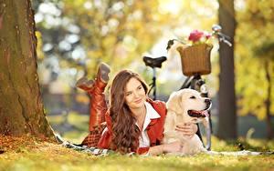 Fotos Golden Retriever Hund Fahrräder Braune Haare Liegen Gras Unscharfer Hintergrund junge frau