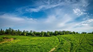 Fotos Grünland Wald Himmel Gras
