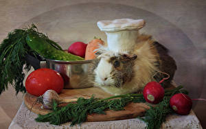Wallpaper Cavy Vegetables Tomatoes Allium sativum Radishes Dill Winter hat Cook animal Food
