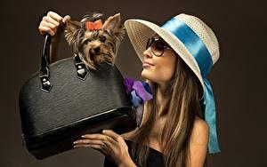 Desktop hintergrundbilder Handtasche Hunde Yorkshire Terrier Hand Der Hut Brille Farbigen hintergrund Mädchens