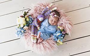 Bilder Hasen Rosen Hortensien Spielzeug Bretter Baby Schlafendes Kinder