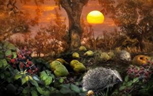 Fotos Igel Brombeeren Wälder Sonne Tiere